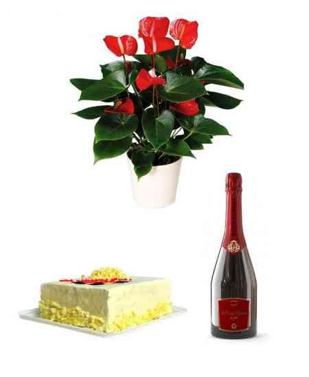 """Anthurium roșu mare + Șampanie """"Bacio di Bolle"""" + Tort din ciocolată albă"""