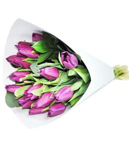 Bouquet of purple tulips in white paper