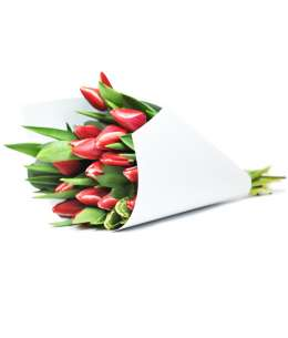 Bouquet of red tulips in white paper