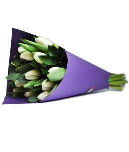 Bouquet of white tulips in purple paper