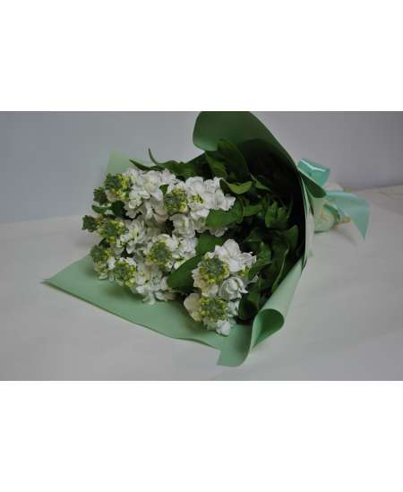Bouquet of white matiola in tiffany paper