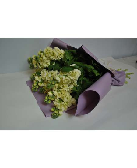 Bouquet of 11 cream matiola in purple paper