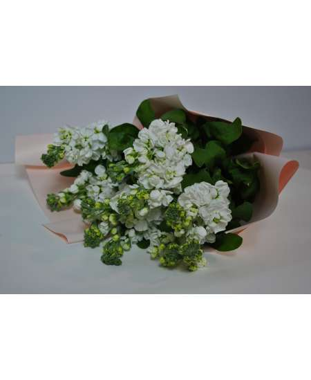 Bouquet of 11 white matiola in pink paper