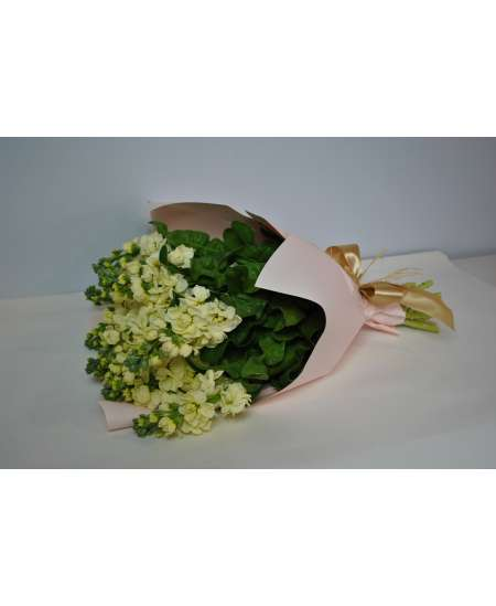 Bouquet of 11 cream matiola in pink paper