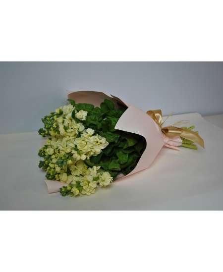 Букет из 11 кремовых Матиола в розовой бумаге