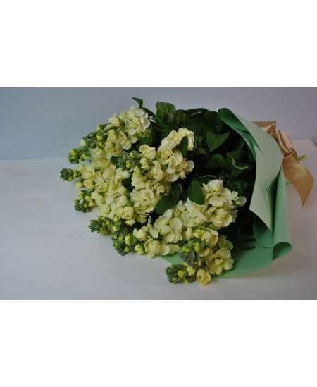Bouquet of 11 cream matiola in tiffany paper