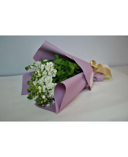 Bouquet of 11 white matiola in purple paper