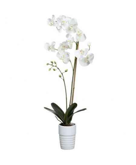 Маленькая белая Орхидея Фаленопсис