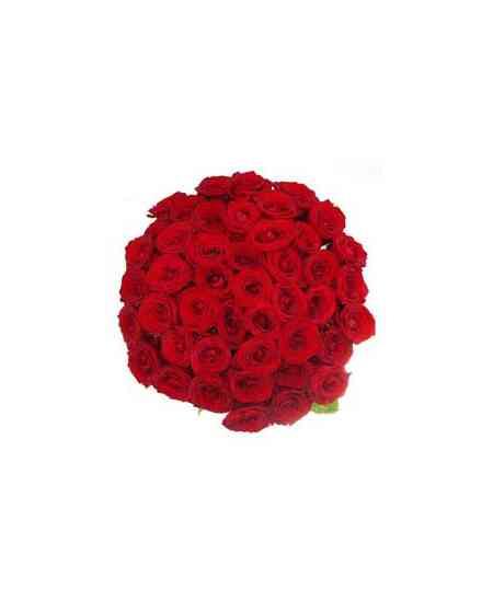 """Trandafiri roșii """"Olanda"""" 40-50cm"""