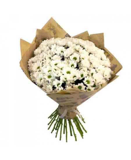 Crizanteme albe