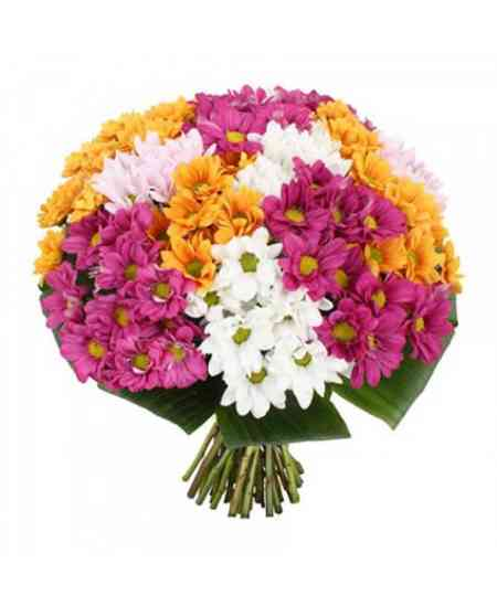 Crizanteme mixte