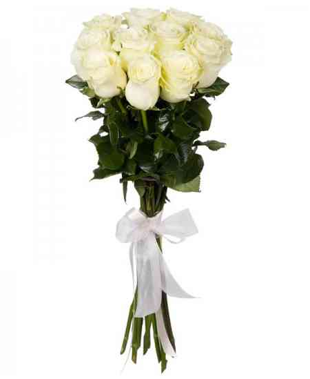"Trandafiri albi ""Olanda"" 80-90cm"