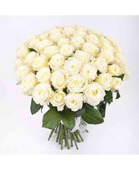 Buchet din 51 trandafiri albi 60-70cm