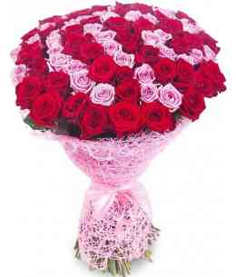 "101 pink and red roses ""Netherlands"" 80-90cm"