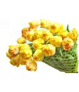 Yellow Double tulips EXCLUSIVE