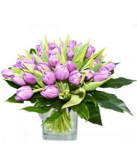 Lalele violete bătute EXCLUSIV