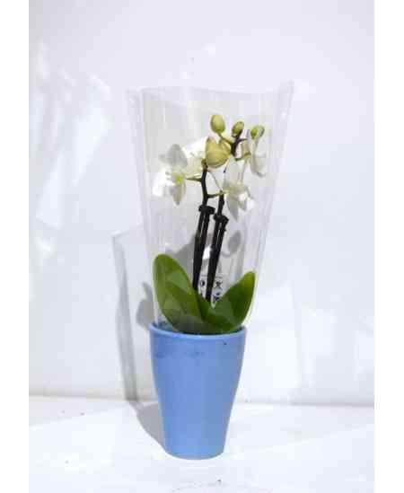 Мини белая Орхидея