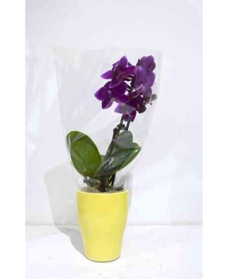 Mini Orhidee violetă