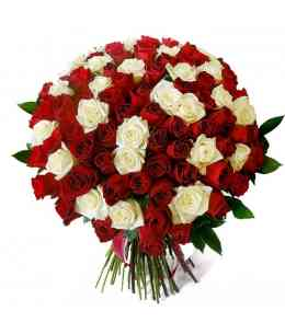 Bouquet of 101 white and red roses 60-70cm
