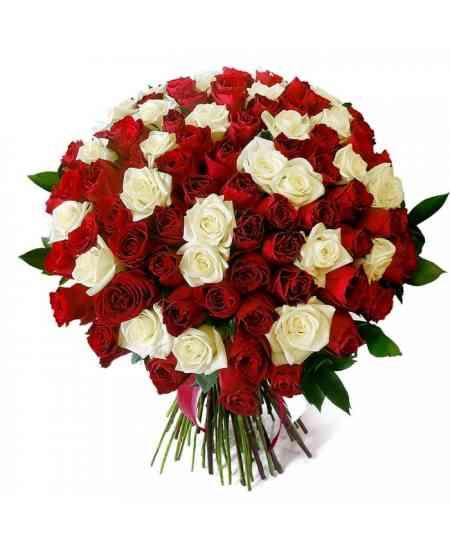 Buchet din 101 trandafiri albi și roșii 60-70cm