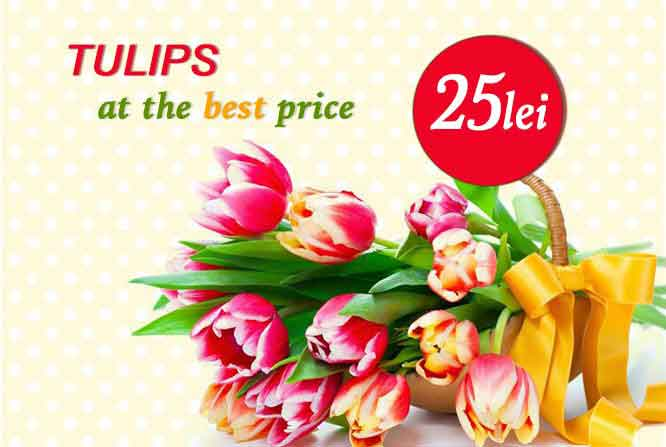 Tulips at 25 MDL