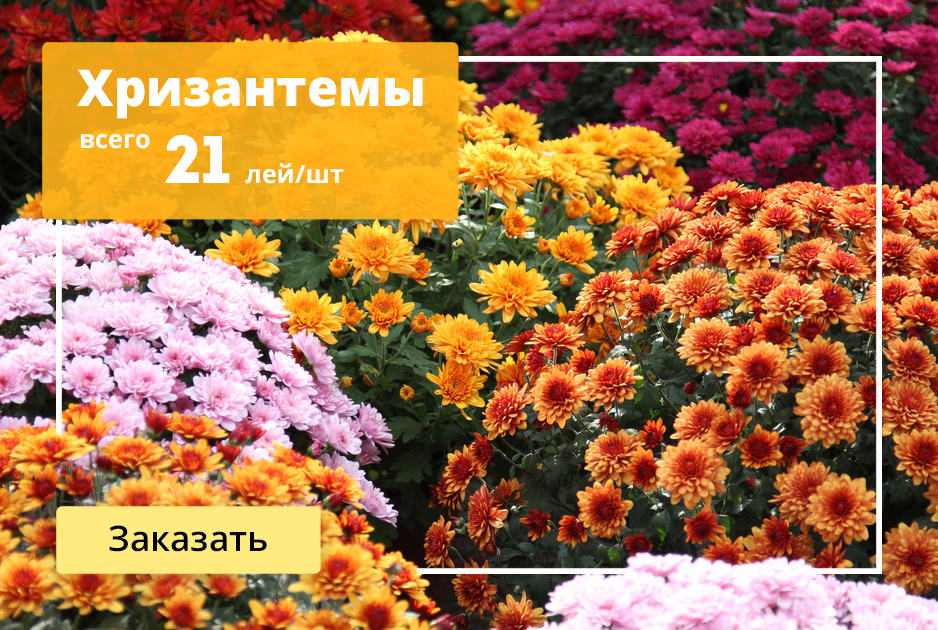Кишинев доставка цветов